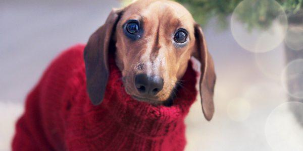 top-10-patron-tricot-chien-en-tete